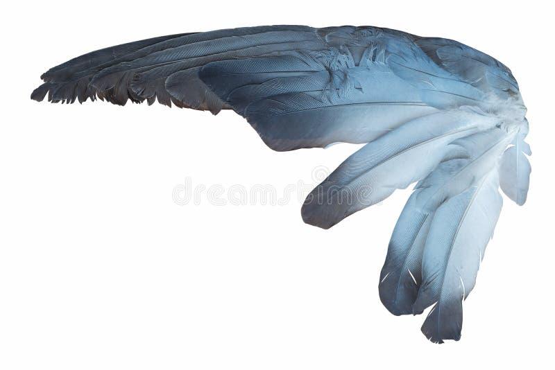 Fågelvinge som isoleras på vit arkivbild