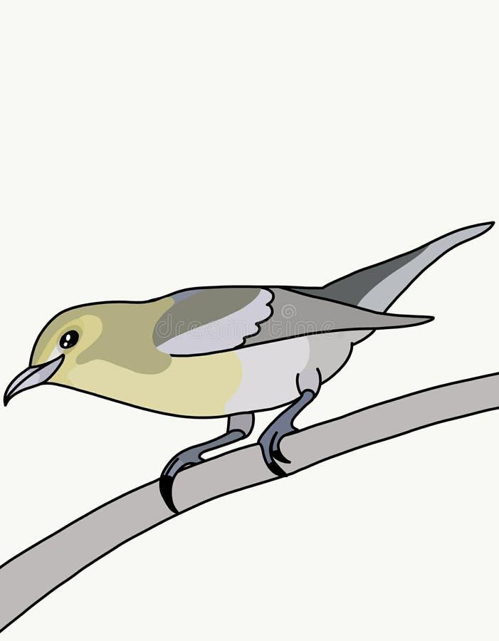 Fågelvireon stock illustrationer