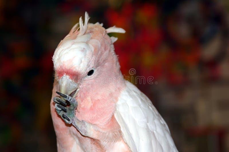 Fåglar 1 Arkivfoto