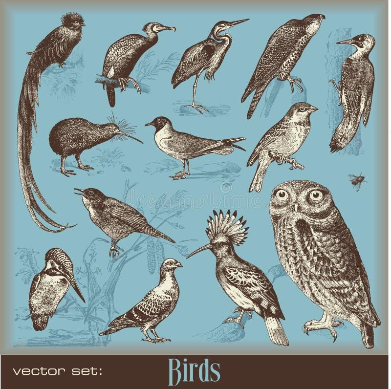 fåglar royaltyfri illustrationer