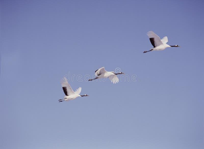 Download Fåglar fotografering för bildbyråer. Bild av fält, natur - 276645