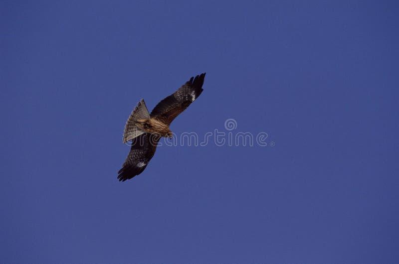 Download Fåglar fotografering för bildbyråer. Bild av green, fluga - 279739