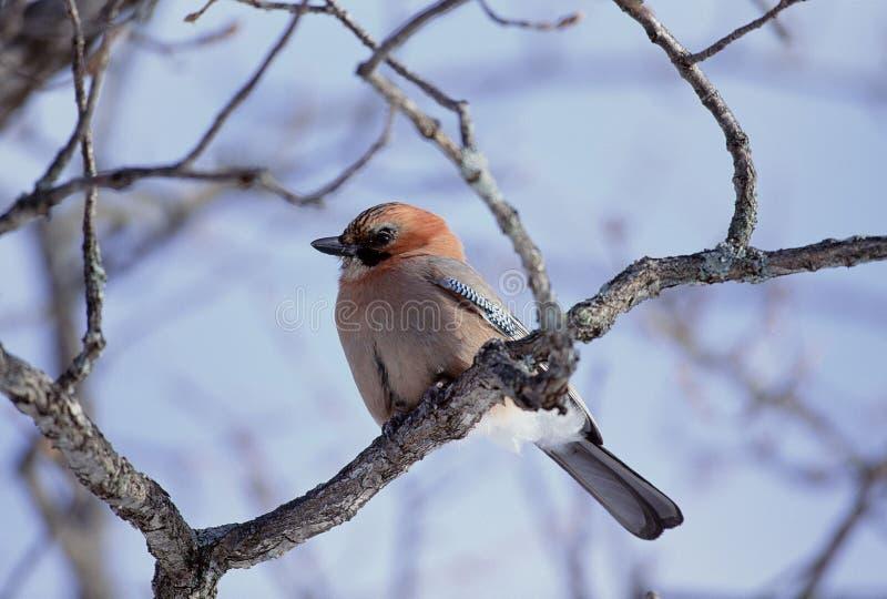 Download Fåglar fotografering för bildbyråer. Bild av vinge, öga - 279775
