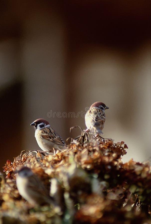 Download Fåglar fotografering för bildbyråer. Bild av fluga, tree - 279781