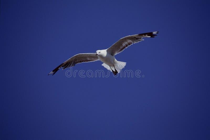 Download Fåglar fotografering för bildbyråer. Bild av green, simhudsförsett - 279819