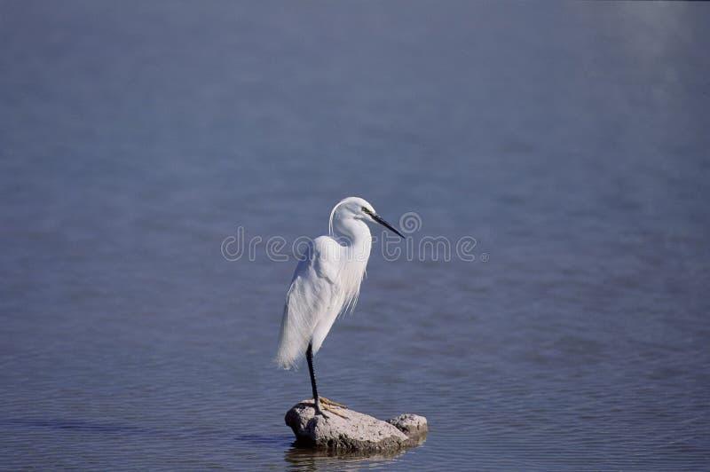 Download Fåglar arkivfoto. Bild av kran, heron, vinge, simhudsförsett - 279824