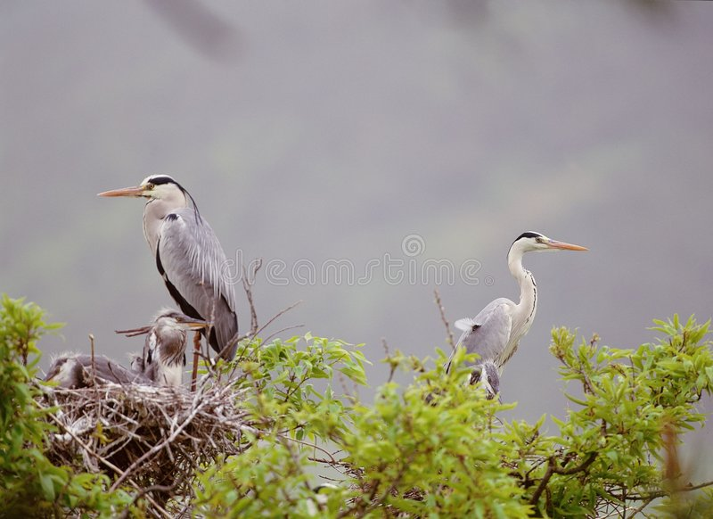 Download Fåglar arkivfoto. Bild av egret, heron, ekosystem, stork - 282248