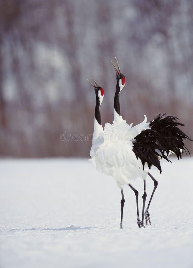Download Fåglar arkivfoto. Bild av vinge, fjäder, simhudsförsett - 282294