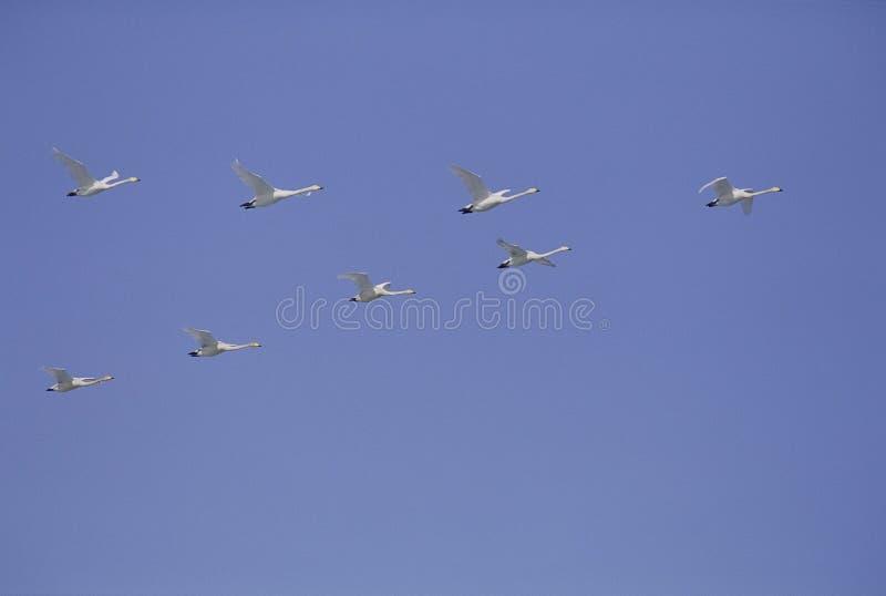 Download Fåglar arkivfoto. Bild av fjäder, fluga, simhudsförsett - 282326