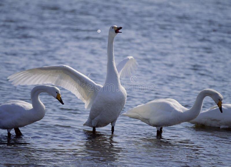 Download Fåglar arkivfoto. Bild av fluga, simhudsförsett, vatten - 283914