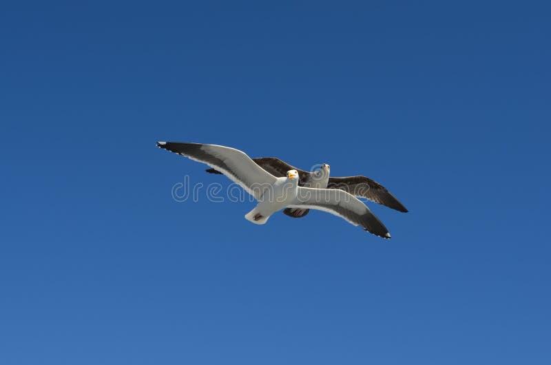 Fåglar av fred arkivbilder
