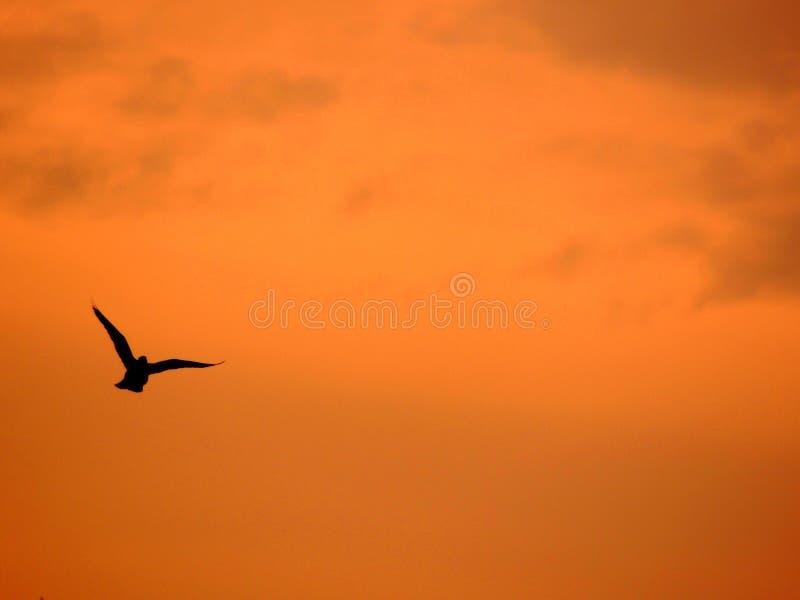 Fåglar av Homs Syrien arkivfoto