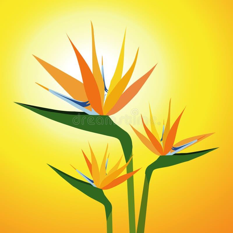 Fåglar av paradisBlomma-vektorn stock illustrationer