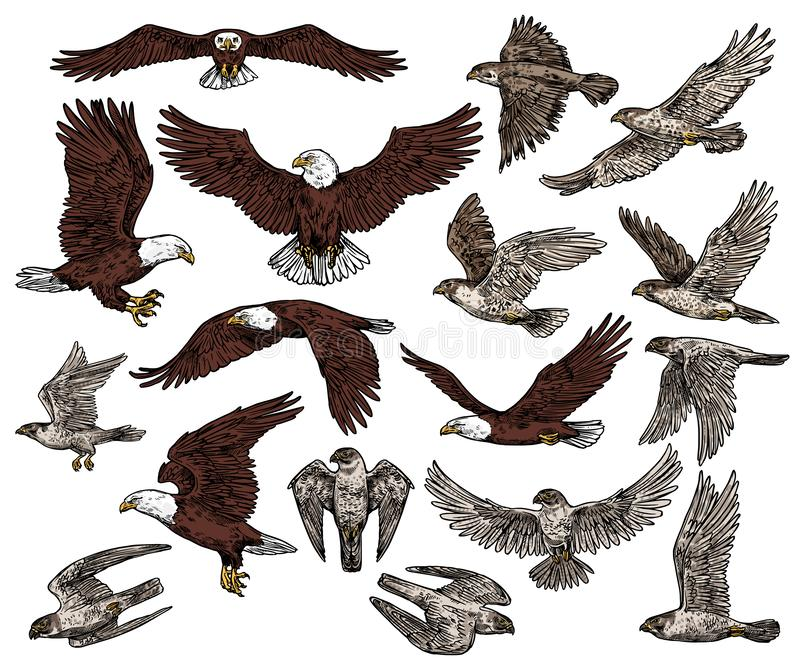 Fåglar av rovet, den rov- örnen och hökfalkar vektor illustrationer