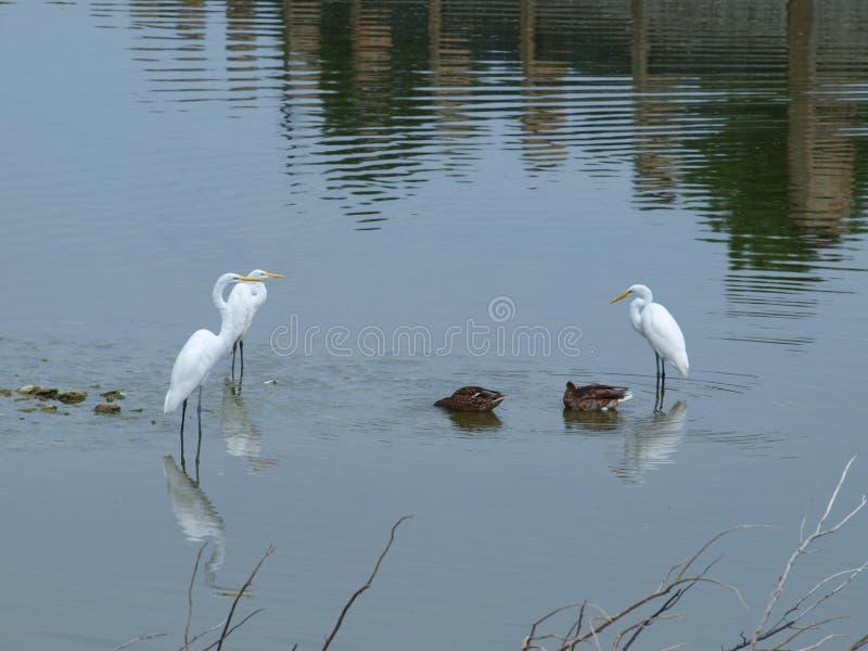 Fåglar av två fjädrar arkivbild