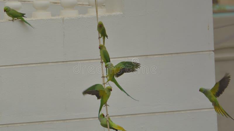 fåglar befjädrar flocken tillsammans arkivbild