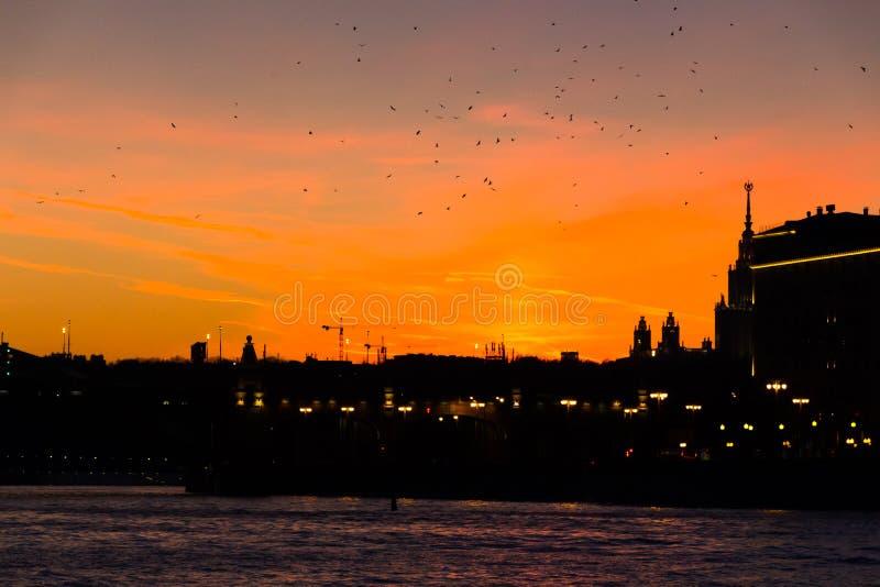 Fåglar flockas och den brännande solnedgången på Moskvaflodinvallningen royaltyfri fotografi