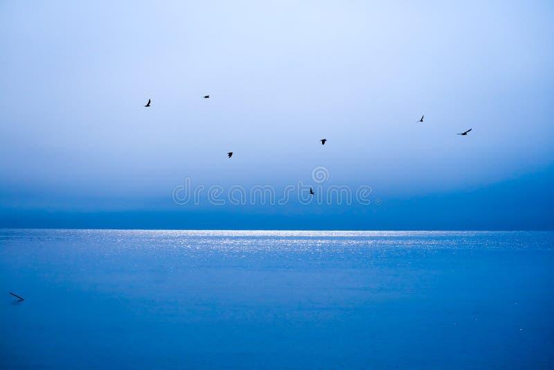 fåglar flyger bort för att returnera över det blåa havet och blå himmel arkivfoton
