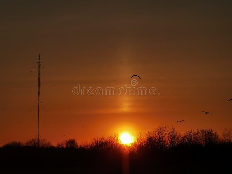 Fåglar flyger till och med solnedgång arkivbild