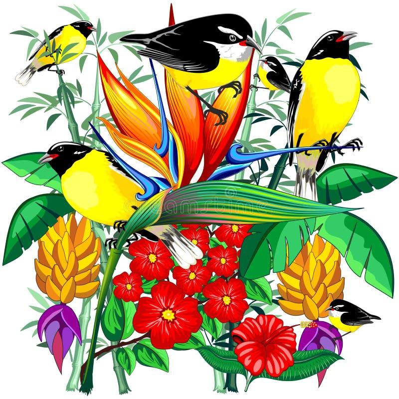 Fåglar gulliga exotiska Bananaquit på den tropiska naturen royaltyfri illustrationer