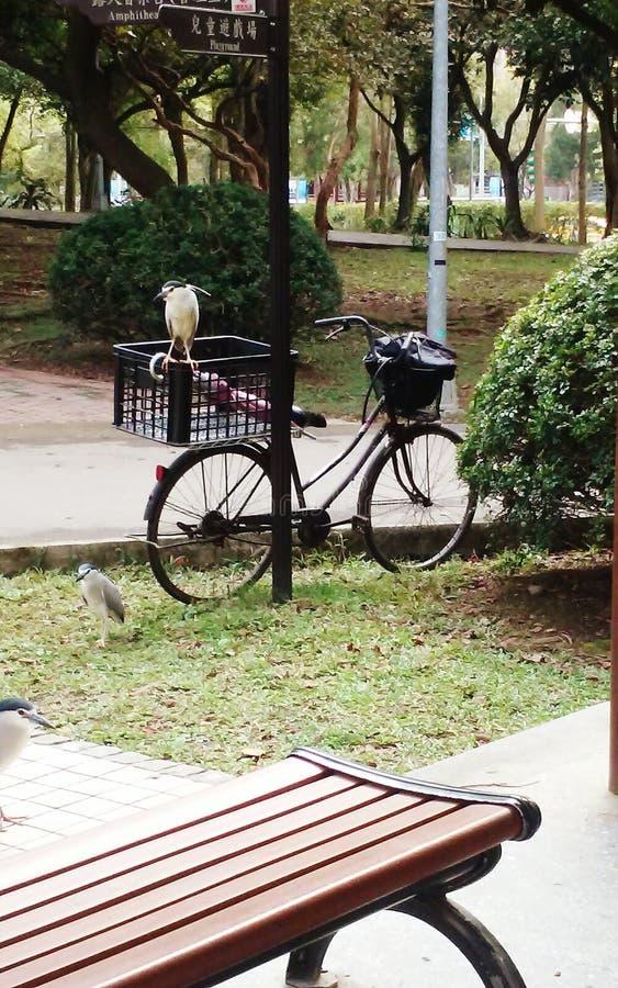 Fåglar i DaAn Park royaltyfria foton