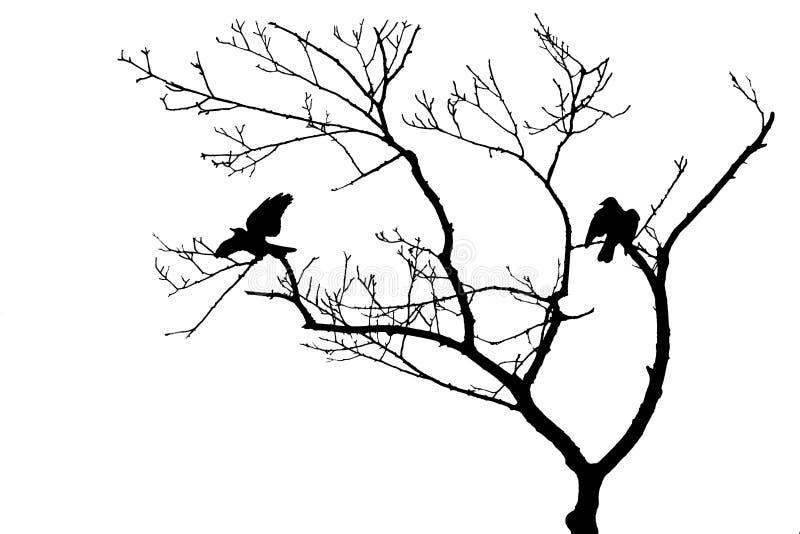 Fåglar i den isolerade trädkonturn royaltyfri bild