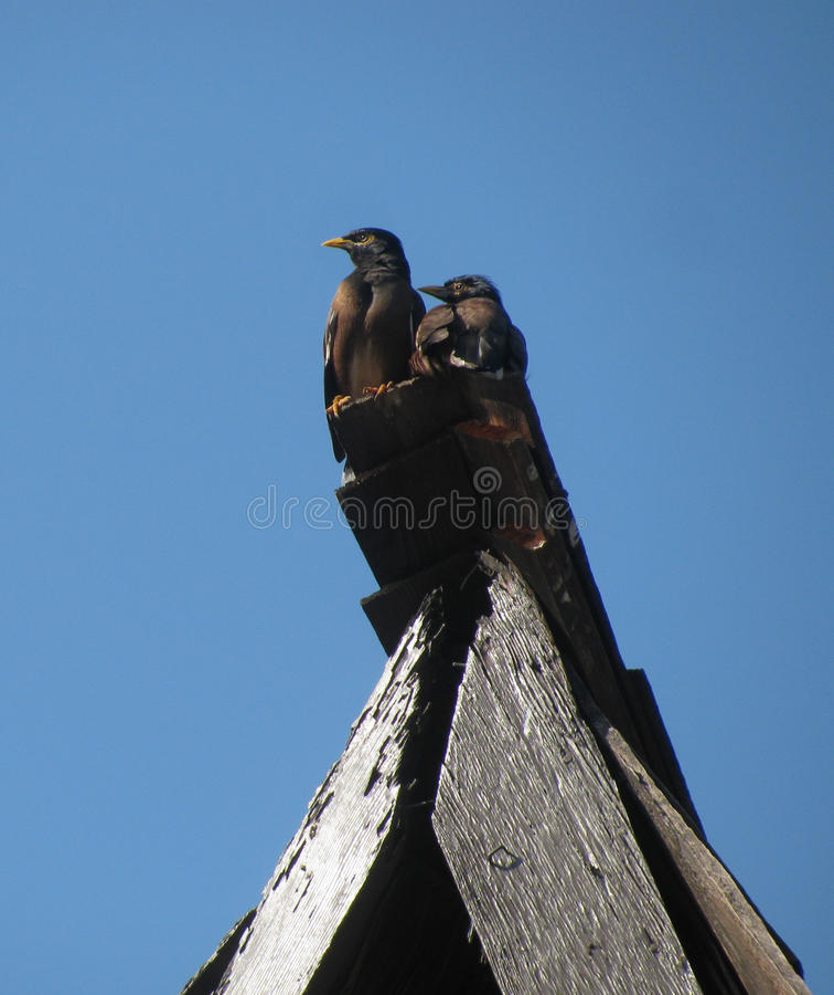 Fåglar i Hawaii royaltyfri foto