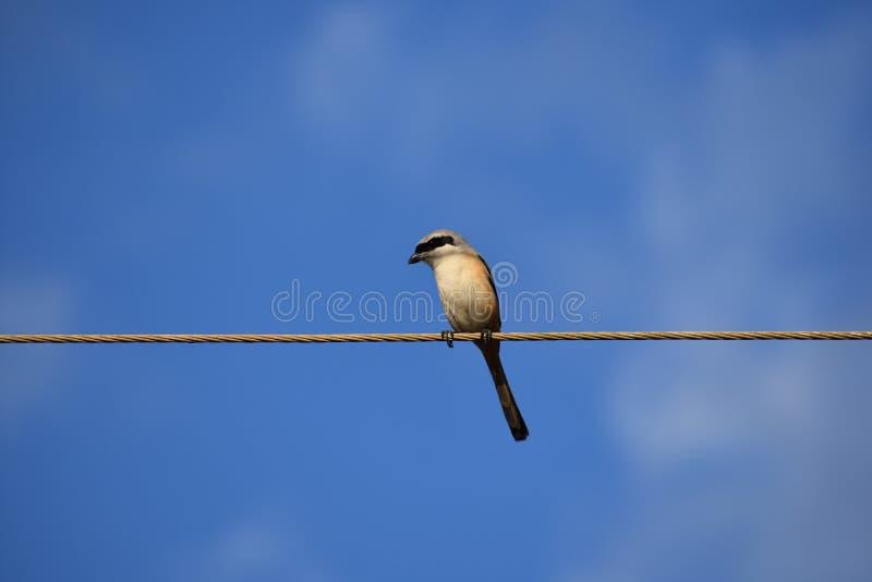 Fåglar i Indien royaltyfri bild