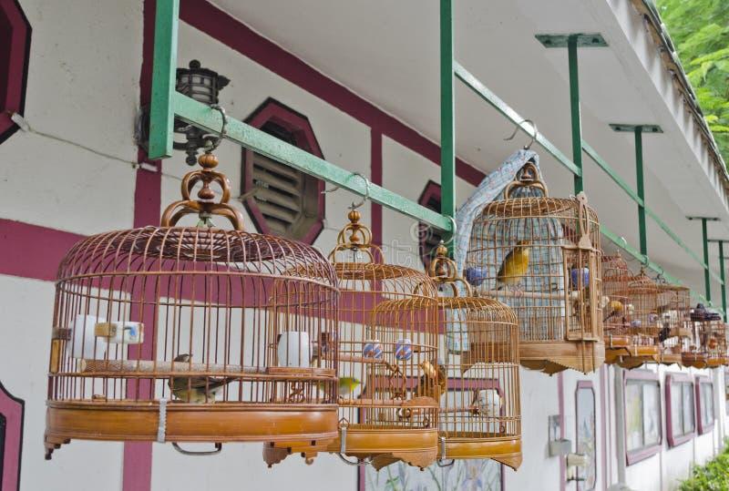 Fåglar i kinesiska stilfågelburar royaltyfri foto