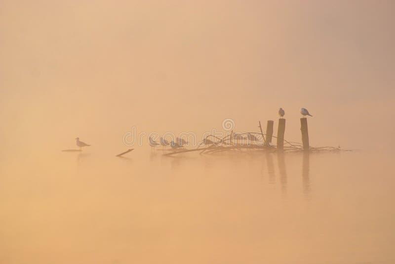 Fåglar i Misty Autumn Morning arkivbilder