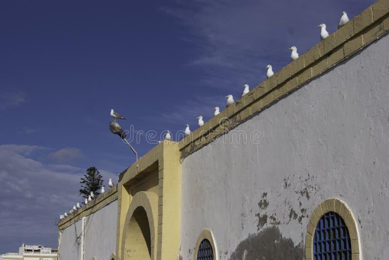 Fåglar i rad på en vägg arkivfoto