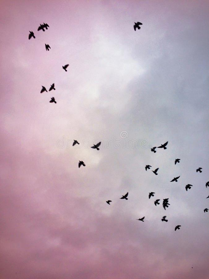 Fåglar i skyen royaltyfri fotografi