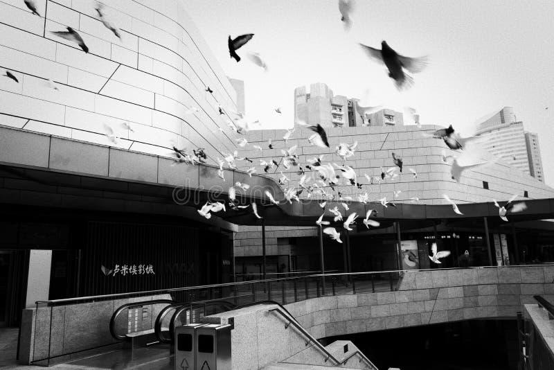Fåglar i staden arkivfoton
