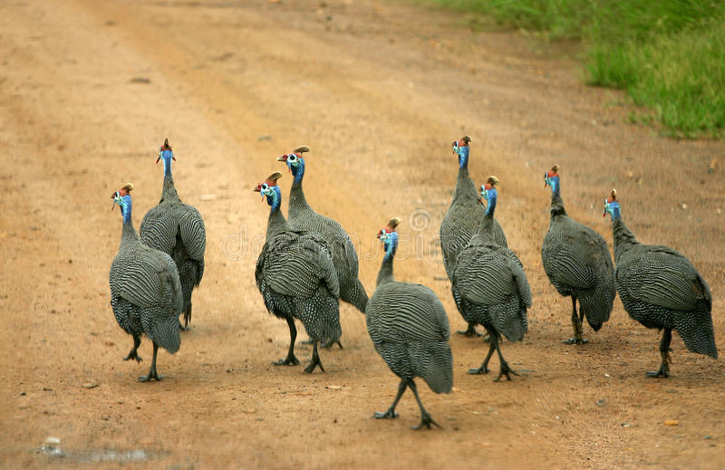 Fåglar i vägen arkivfoto