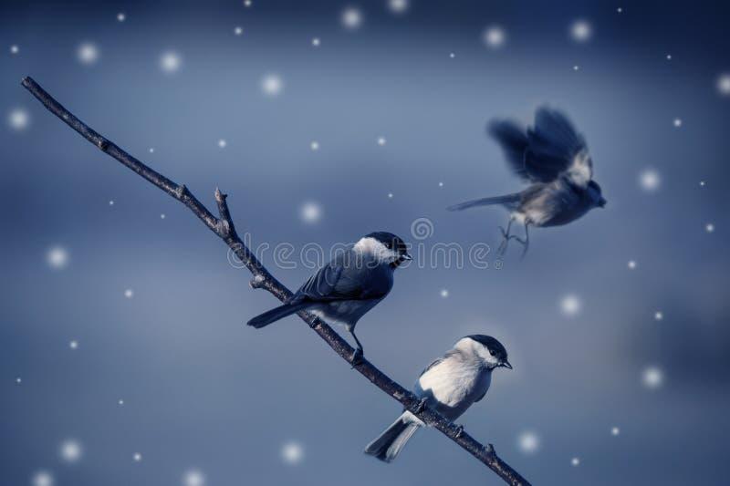 Fåglar i vinter arkivfoto