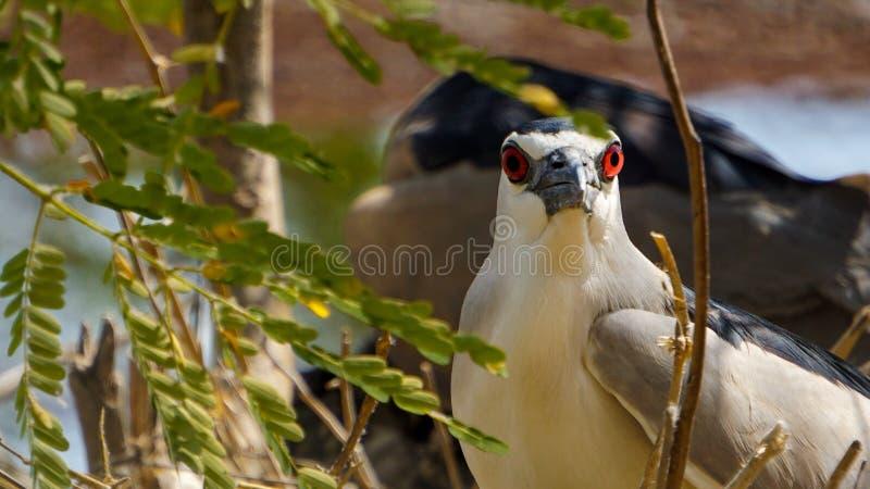 Fåglar i zoo arkivfoton