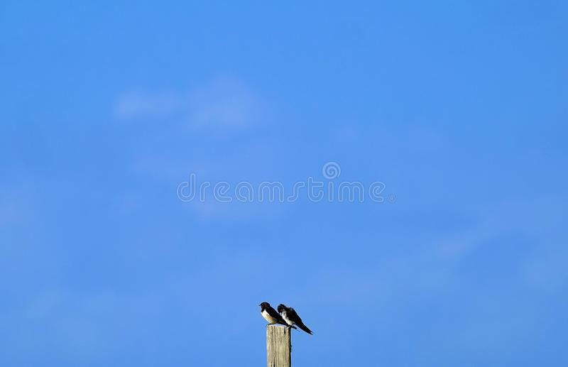 fåglar med den blåa himlen arkivfoton