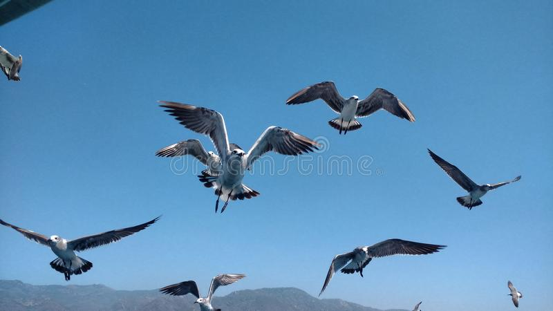 Fåglar och en blå himmel royaltyfria foton