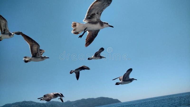 Fåglar och en blå himmel arkivfoto