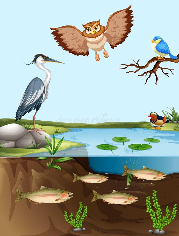 Fåglar och fisk vid dammet royaltyfri illustrationer
