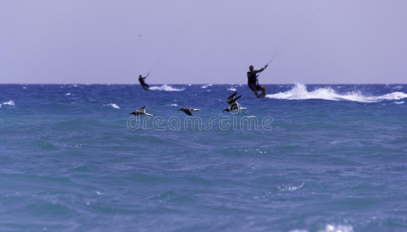 Fåglar och havet arkivfoton