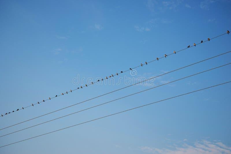 Fåglar på blå himmel för tråd royaltyfria bilder