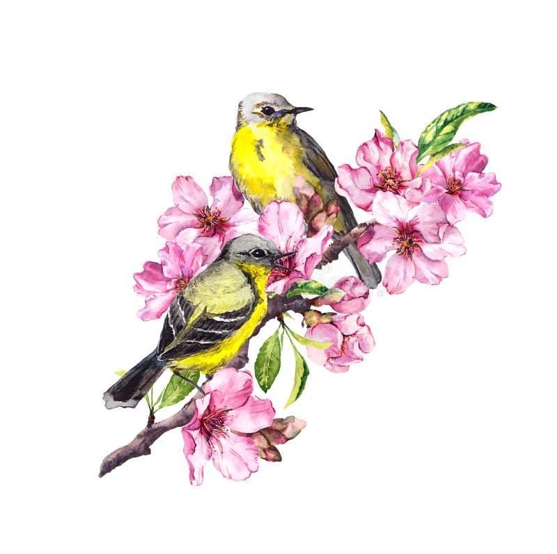 Fåglar på blomningfilial med det rosa äpplet, körsbärsröda blommor sakura Vattenfärgblomningträd vektor illustrationer