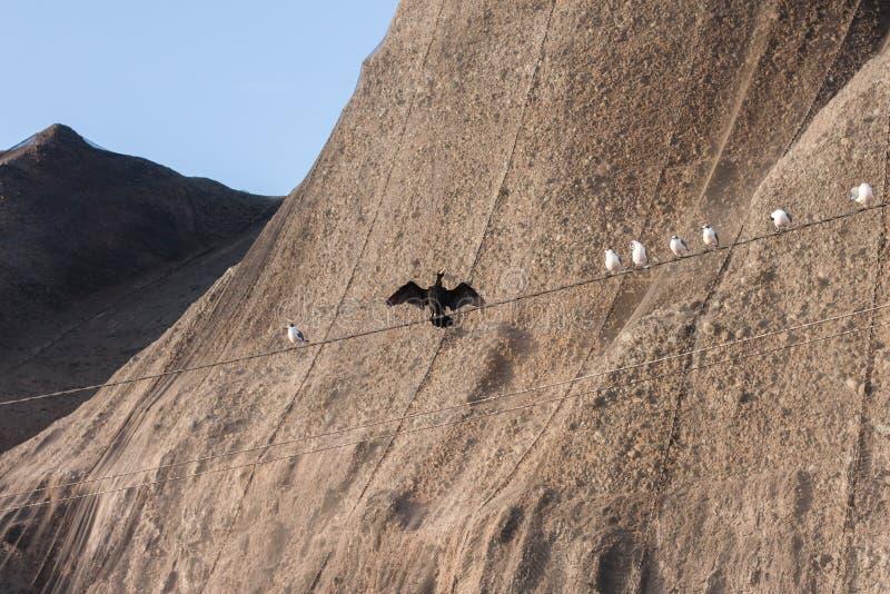 Fåglar på den guld- timmen på Costa Verde arkivfoton