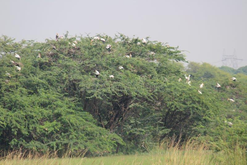 Fåglar på den Sultanpur nationalparken arkivfoton