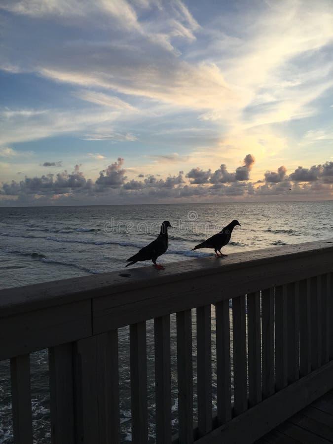 Fåglar på en pir royaltyfri foto