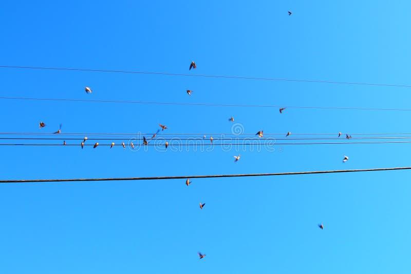 Fåglar på en tråd och i handling på en blå fågeldag arkivfoto