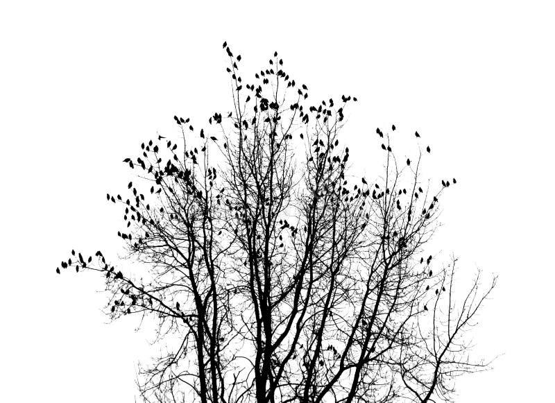 Fåglar på en tree fotografering för bildbyråer