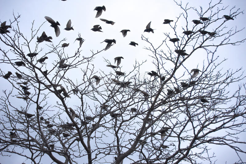 Fåglar på en tree arkivfoton
