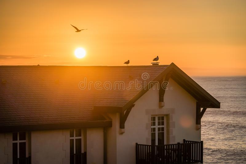 Fåglar på ett tak i solnedgången med havet i bakgrunden royaltyfria bilder